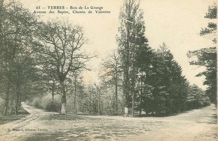 Avenue des Sapins