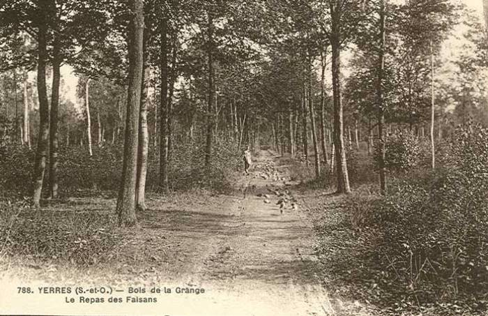 Bois de la Grange